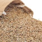 Arkansas-Bulk-Seeds